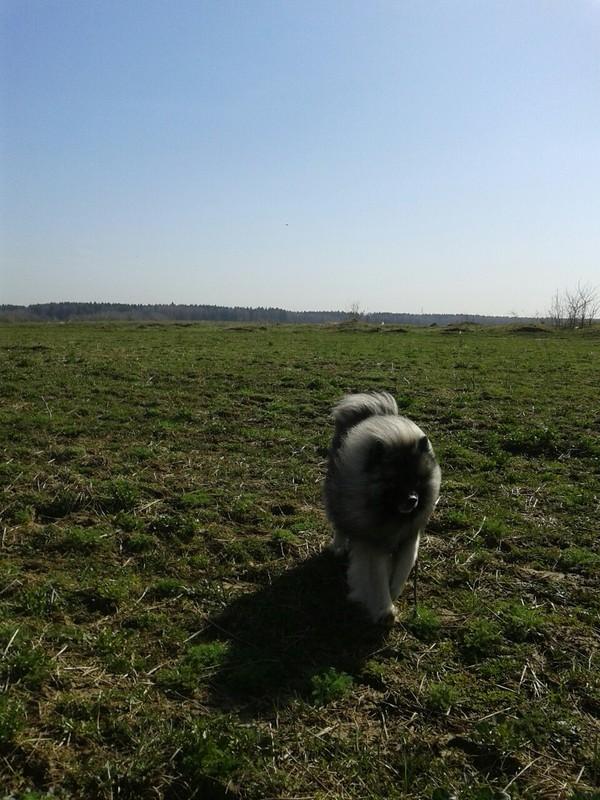 Ветер в харю,  а я шпарю... Собака, Ветер, Прогулка