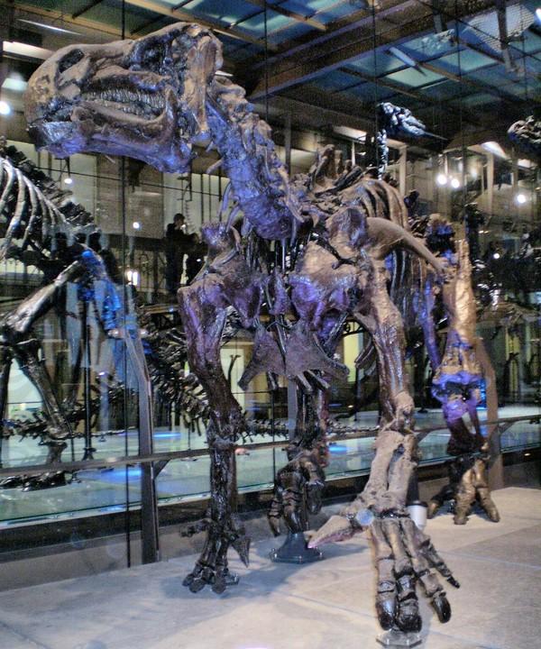 Игуанодон Динозавры, Палеонтология, Игуанодон, Длиннопост