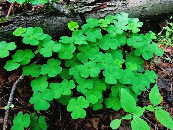 Всем приятного дня! :) Природа, Красота природы, Прогулка по лесу, Лес, Фотография, Длиннопост
