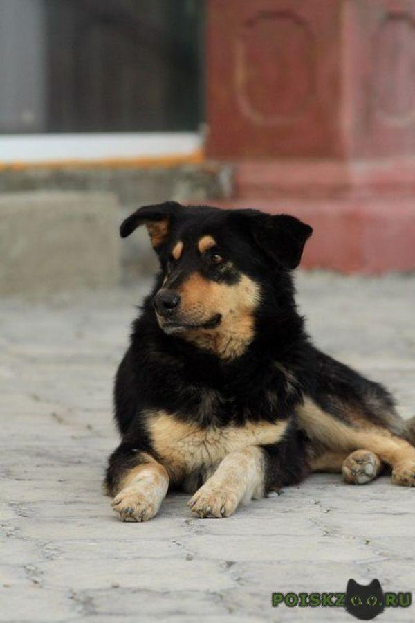 Расширение правил Собака, В добрые руки, Отдам в хорошие руки, Правила, Сообщество