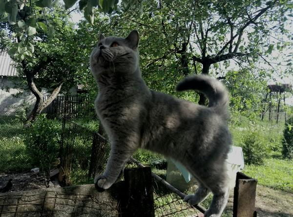 """""""Хорошо в деревне летом"""" кот, деревня, зелень"""