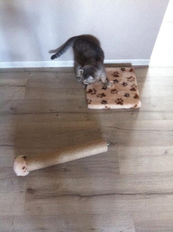 Оно само сломалось кот, сломалось, когтеточка, длиннопост