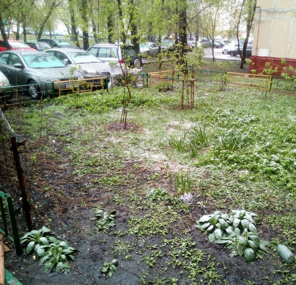 Погода в мае или подготовка к параду? Погода, Москва, Веселье