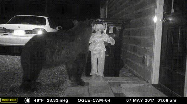 Отпугиватель медведей