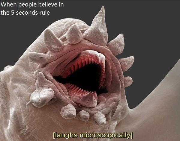 Про микробов на полу Микробы, Смех, Правило пяти секунд