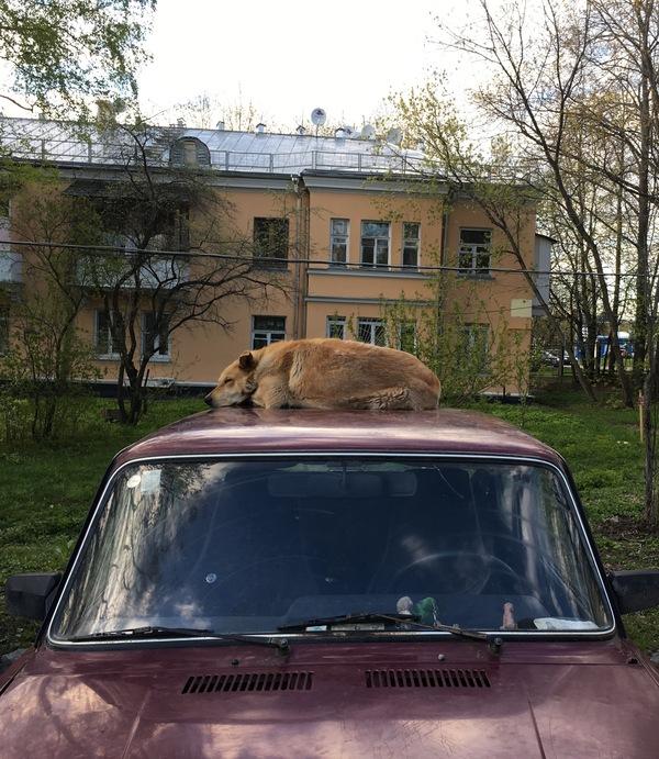 Сигнализация с центральным замком Собака, Собака-Бабака, Porsche Cayenne