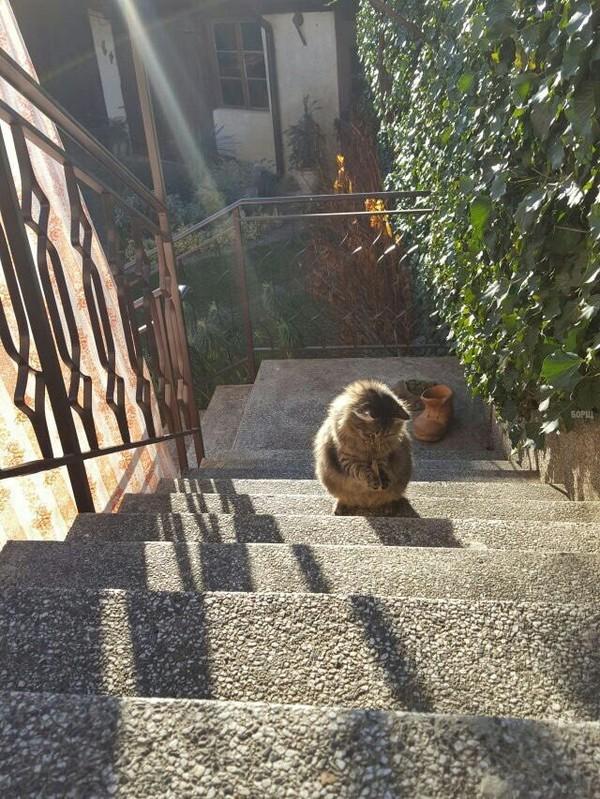 Прищепка Прищепка, Кот, Чебурек, Длиннопост