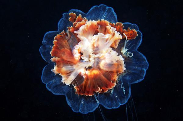 Подводный мир от Александра Семенова Фотография, Подводный мир, Медуза, Александр Семенов, Длиннопост