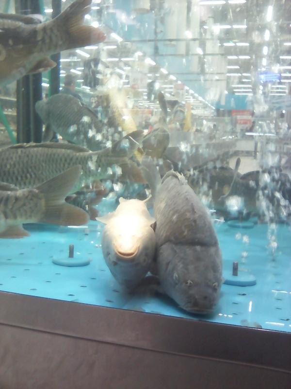 Рыба из австралии Рыба, Австралия, длиннопост