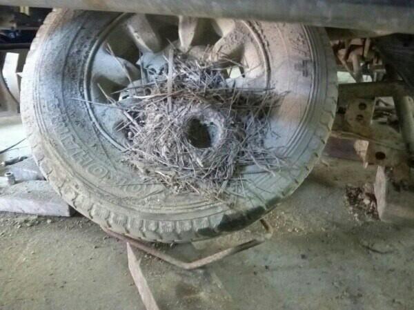 Гнездо нелегалов Гнездо, Кузовной ремонт