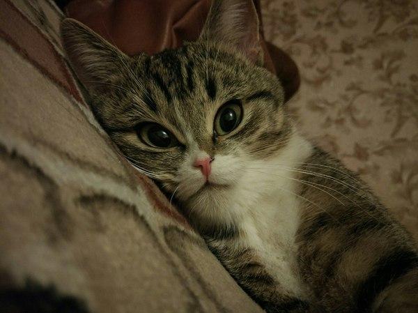 Моим хатико-подписчикам кот, питомец, Бешеный котейка, длиннопост