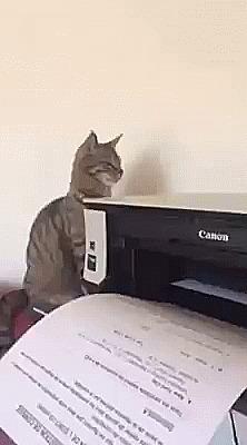 Нужен новый драйвер на кота. Кот, принтер, синхронизация, гифка