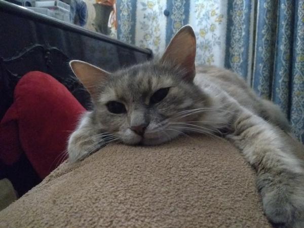 Кошачий вечер , жизнь прекрасна =) кот, спать, Усталость