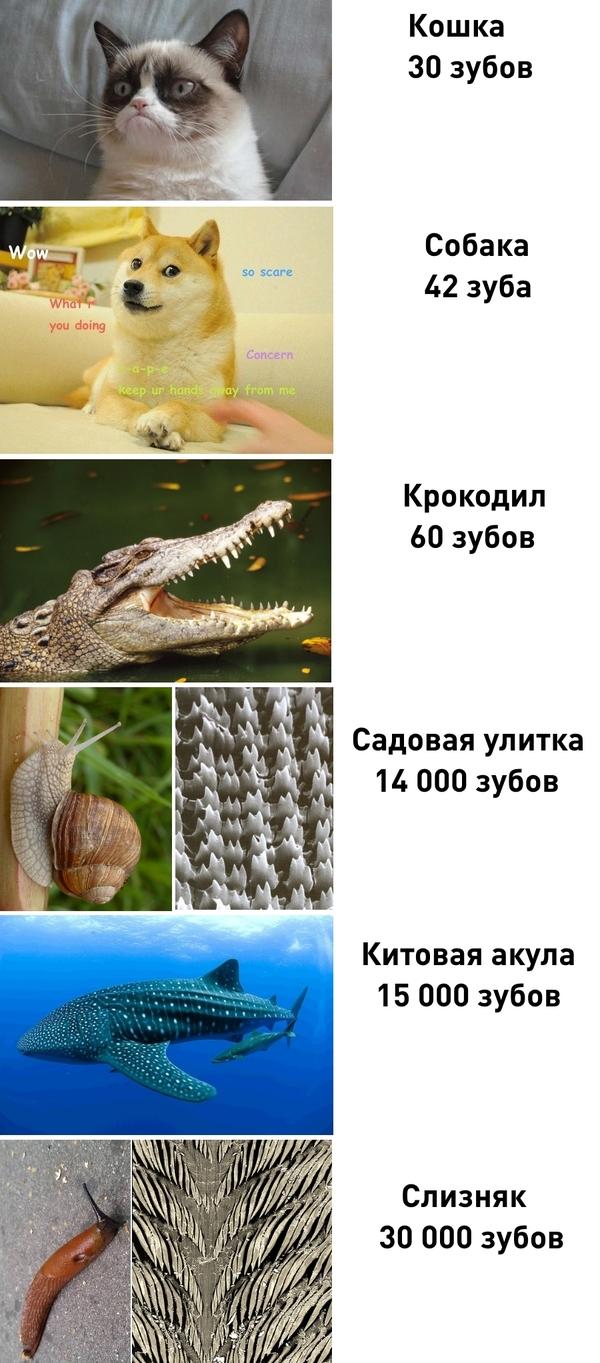 http://cs8.pikabu.ru/post_img/2017/05/18/6/1495101343167540288.jpg