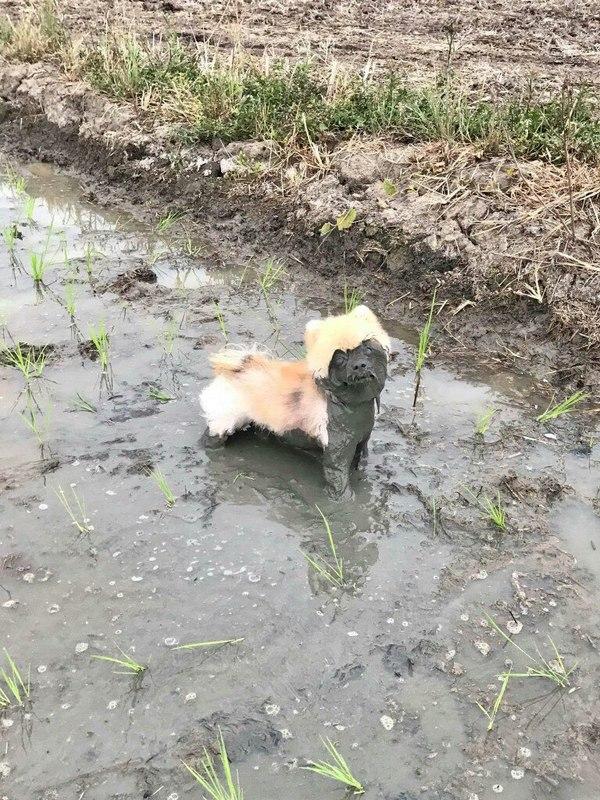 Пушистые собаки не так уж сложны в уходе