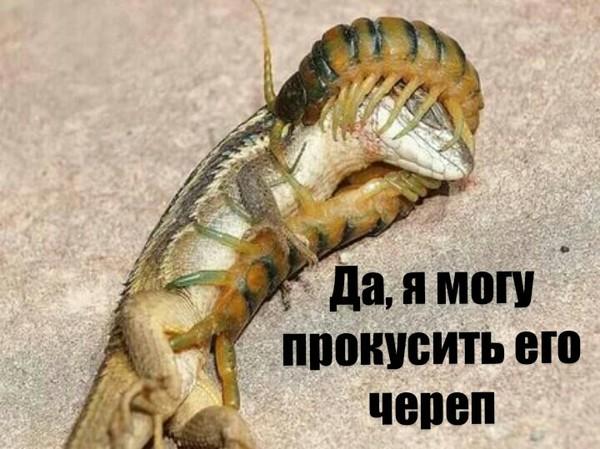 Как у моего репетитора домашняя зверушка убежала. биология, Насекомые, домашние животные, забавное, Общага и учёба, длиннопост