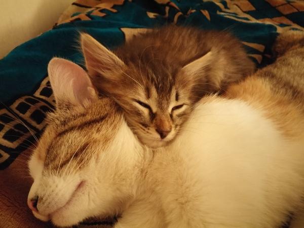 По старой привычке кот, фотография, котомафия