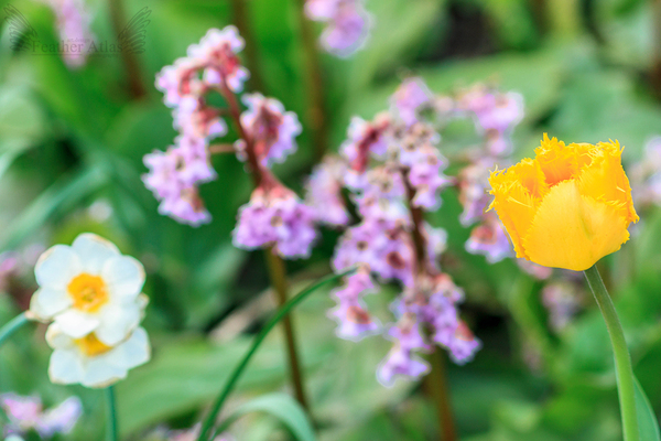 Почти лето фотография, май, природа, цветы, птицы, скоро лето, длиннопост