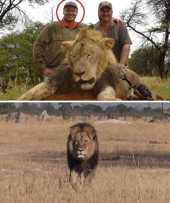 Смотреть как разрывают чернокожих львы видео