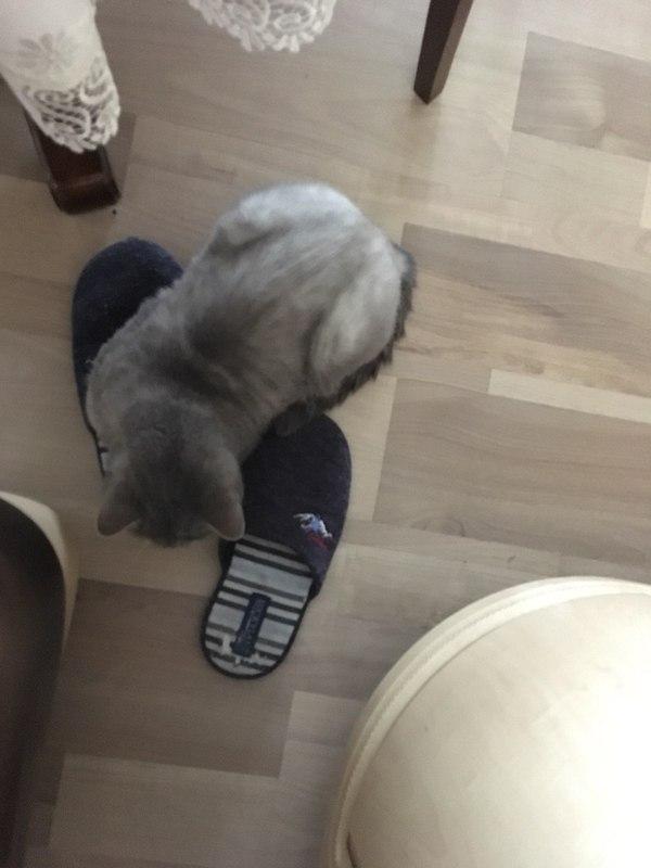 Нужна помощь! Пропал кот! Подмосковье, Потерялся кот, Помощь, Кот, Длиннопост