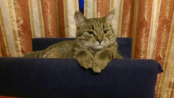 Приходишь с работы уставший, а на тебя вот так смотрят.... Кот, Суровость, Серьезность