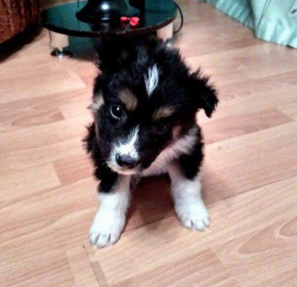 Милый щенок ищет дом. Собака, Улан-Удэ, В добрые руки, Помощь