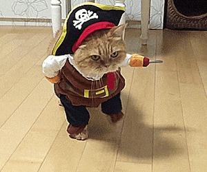 Коты в костюмах. Гифки Кот, Кошки и котята, Костюм, Милота, Гифка