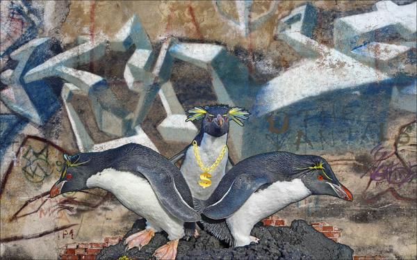 Хоть сейчас на обложку. The National Geographic, Instagram, Фотография, Photoshop, Картинки, Пингвины