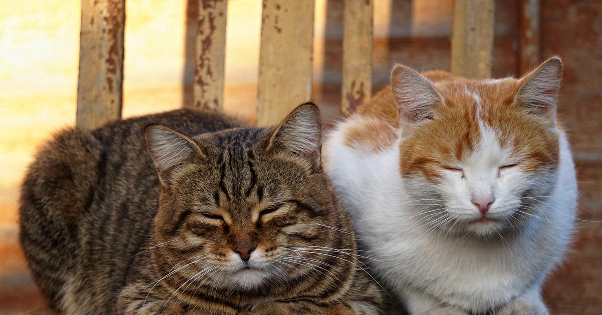 картинки рыжего и серого кота сшить одеяло