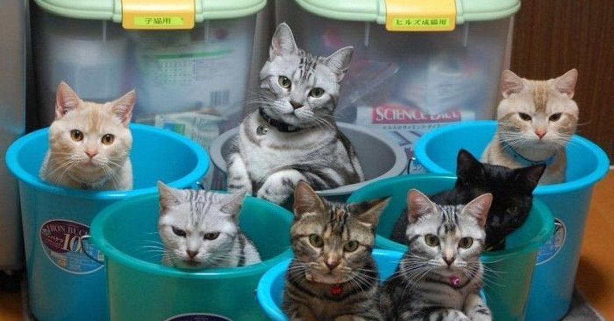 котенок в ведре картинка рецепт приготовления