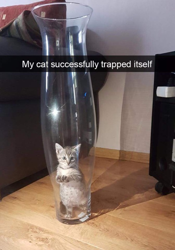 Мой кот успешно поймал сам себя