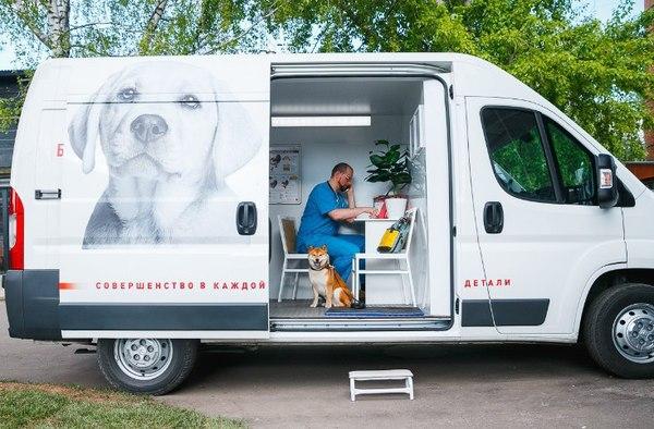 В Москве запустили бесплатный ветмобиль новости, ветеринария, Собака