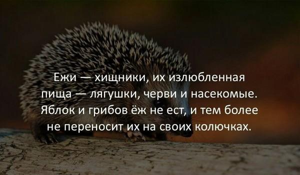 Только не говорите, что вы об этом знали!)