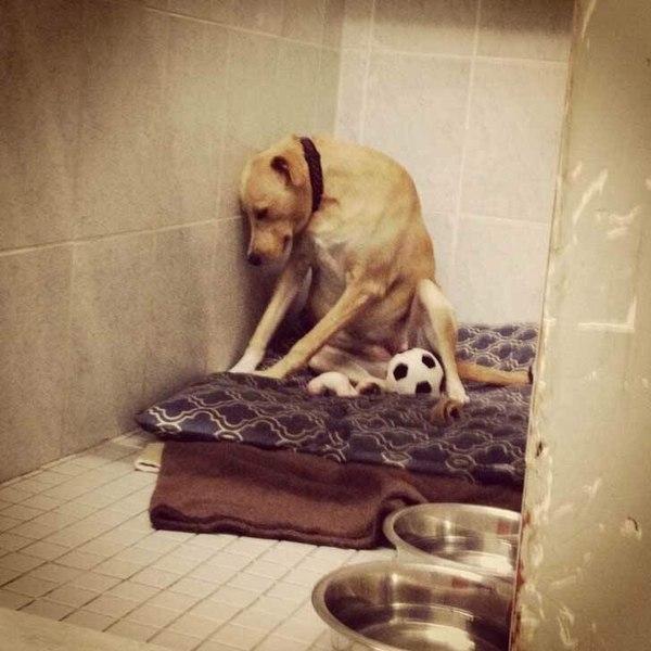Собаки, самые преданные друзья человека грусть, верность, Собака
