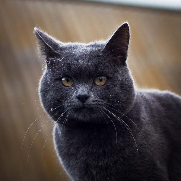 Кот Римус с украшением из росы кот, роса, усы