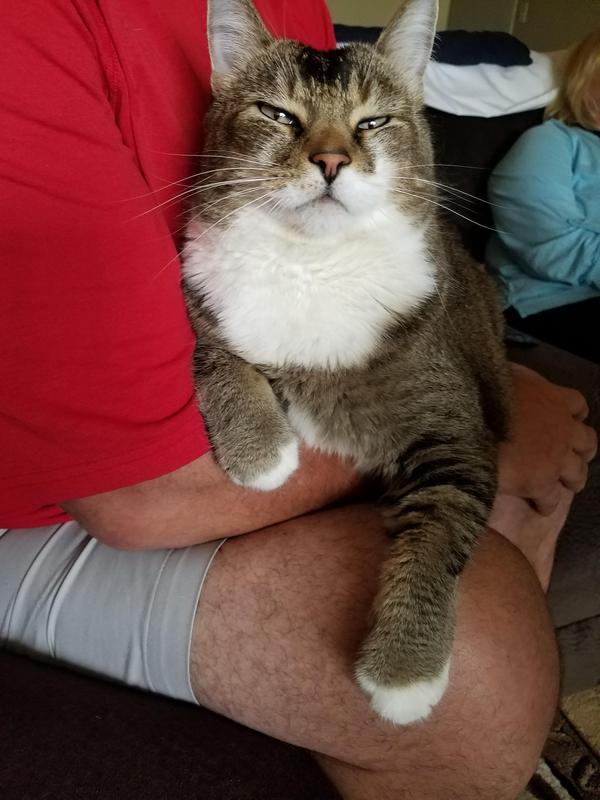 Когда заметил несанкционированную съемку своей морды кот, фотосъемка, нет, фотография, длиннопост