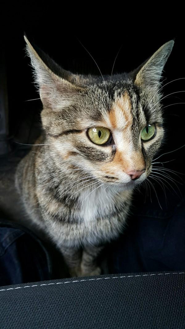 Неожиданный гость трехцветная кошка, парковка, длиннопост, кот