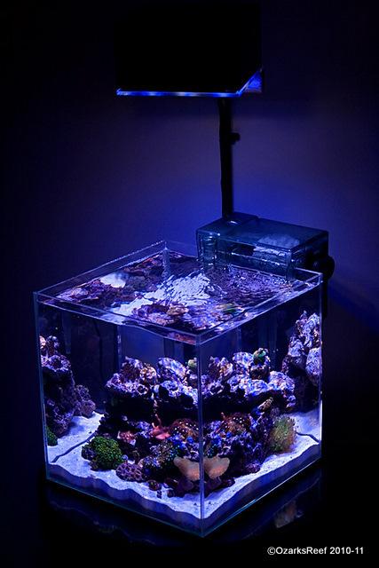 Создание морского рифового аквариума аквариум, морской, немо, длиннопост