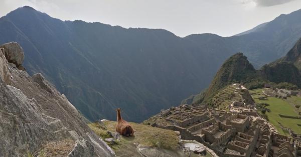 Интересный вид на google maps, Мачу-пикчу Перу, Мачу-Пикчу, Альпака