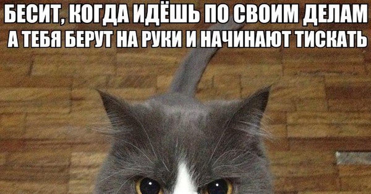 кот на картинке не беси меня плов считается