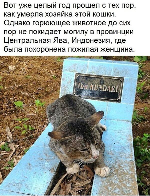 Преданость кошки хатико, кот, Преданность, Животные, Любовь