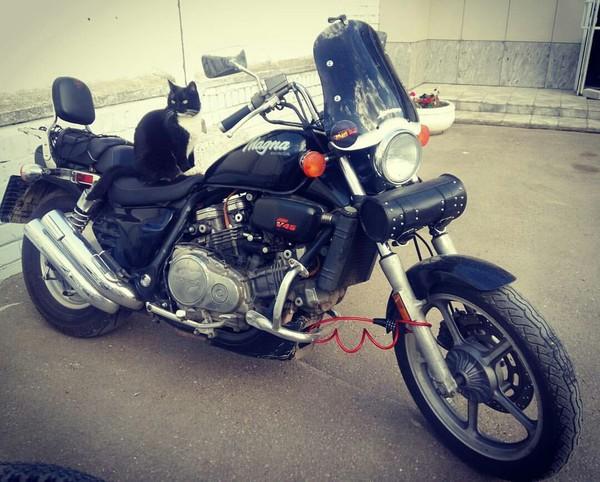 Киса Кот, Мотоциклист, Фотография