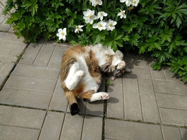 Весна пришла кот, весна, лохматое пузико