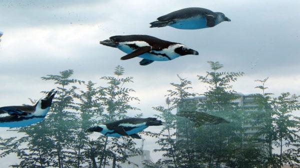 Немного летающих пингвинов вам в ленту пингвины, аквариум, панорама, длиннопост