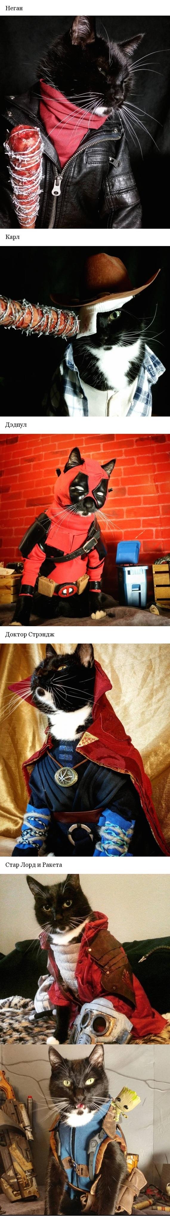 КотоКосплей #2 кот, Косплей, длиннопост, мой хозяин идиот, ходячие мертвецы, Deadpool, Доктор Стрэндж, Стражи галактики