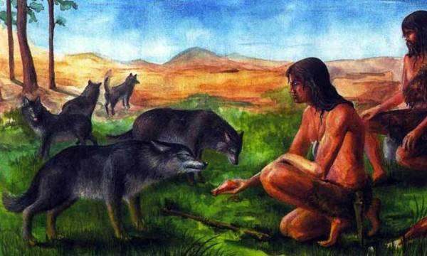 Пост о том, как собаку одомашнили, или что таит в себе потомок волка. Интересное, Познавательно, Наука, Эволюция, Собака, Волк, Одомашнивание, Днк, Длиннопост