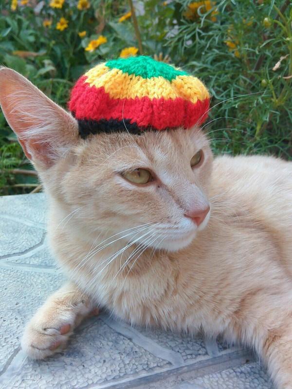 Селфи-кот Кот, Котики - наркотики, Раста, Растаман, Длиннопост