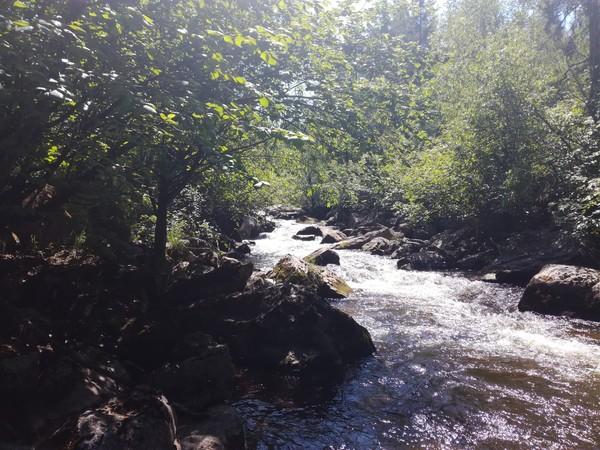 Немного природы Иркутской области. природа России, Иркутская область, орленок, длиннопост