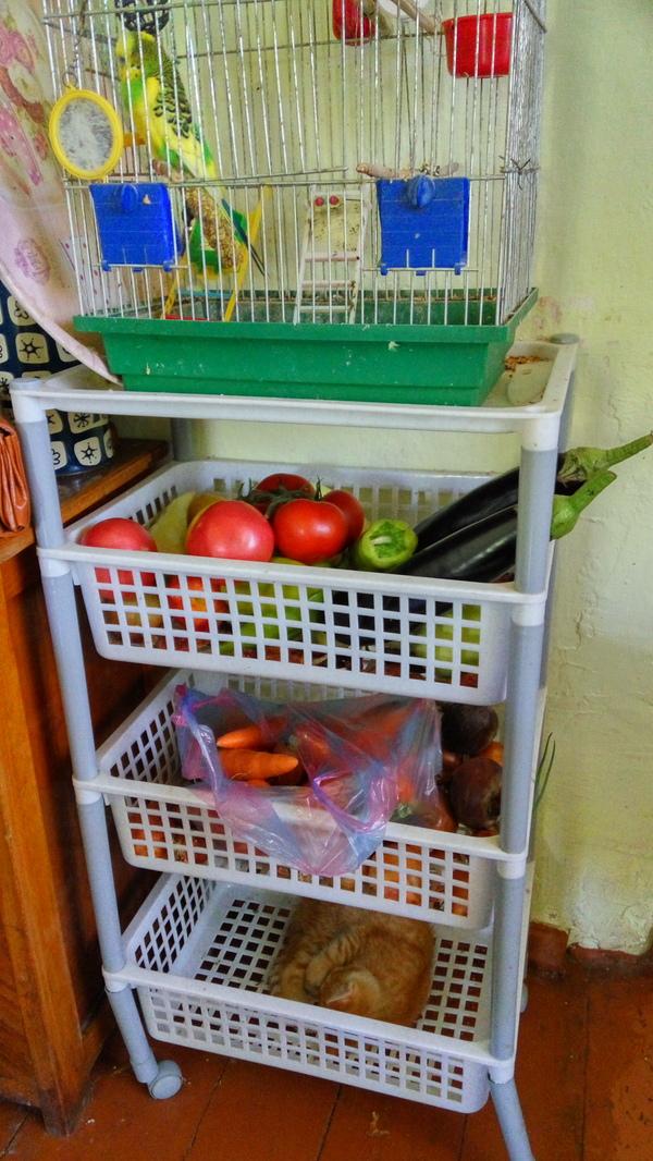 Удобный стеллаж стеллаж, кухня, овощи, живность
