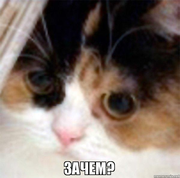 Подписчику кот, зачем, подписчики
